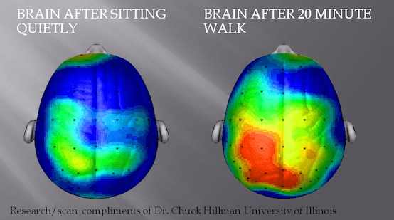 Brain after sitting and walking study