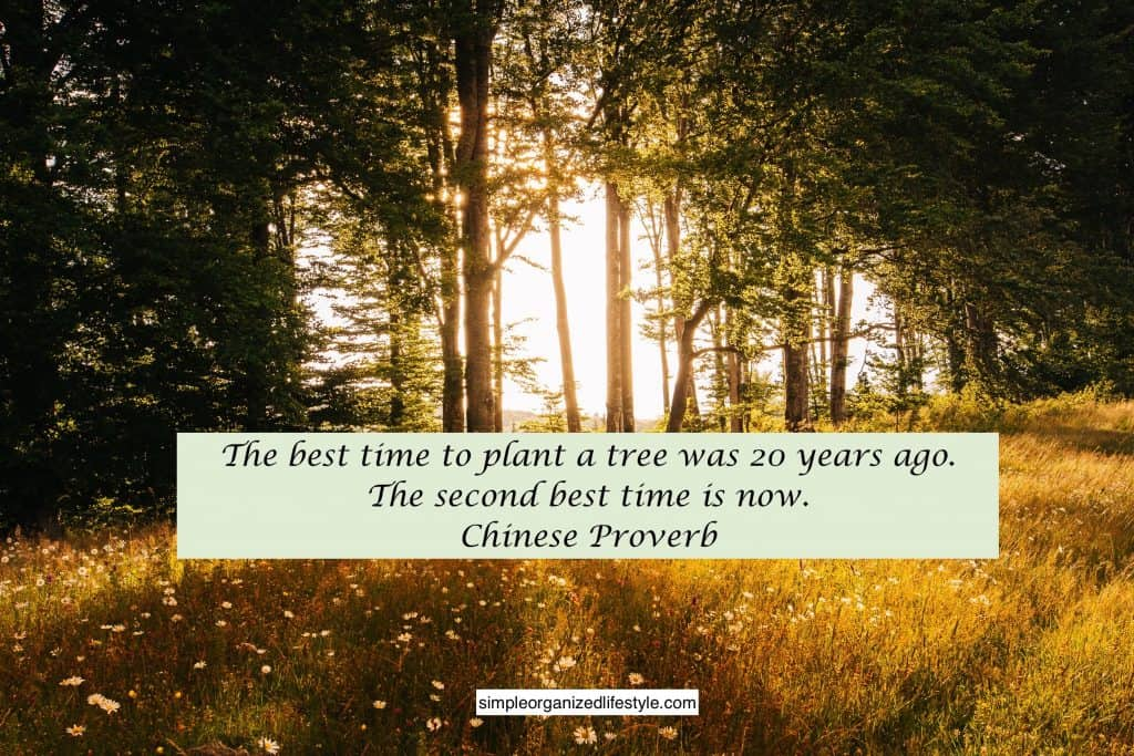 best time to plant a tree quote